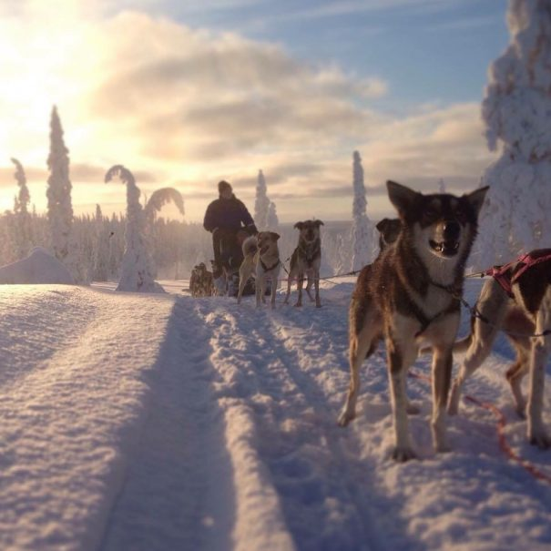 Husky safari - Northern Lights Riders - Aurora Ivalo - Inari - Saariselka